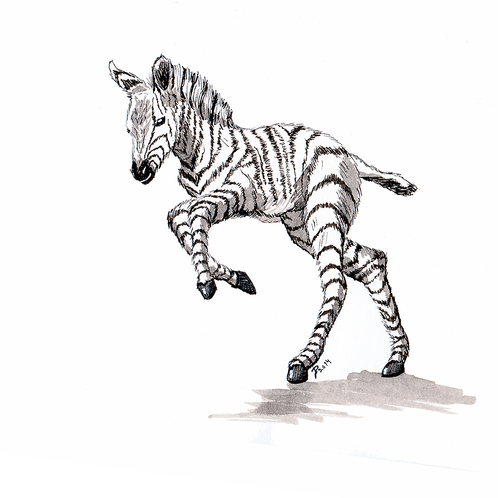Sumi-e ink Sketch of a baby Zebra learning to walk